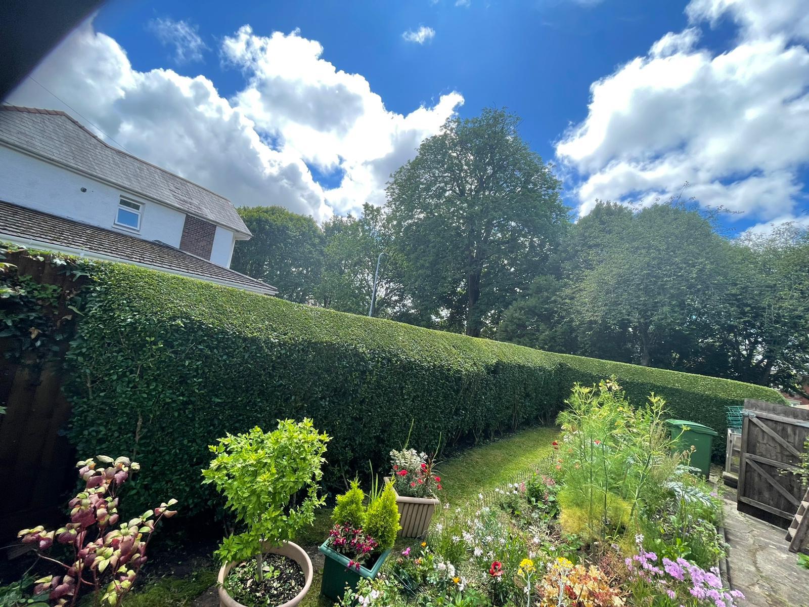 Hedge Cutting Cardiff
